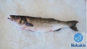 """Λαβράκι Ελλάδος Αμβρακικού (1,3-2,5kg) """"Dicentrarchus labrax"""" τιμή κιλού"""