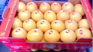 Πορτοκάλια Χυμού Λακωνίας Β' ποιότητας 1 κιλού - Παλέτα 650 κιλών