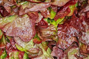 Σαλάτα Λόλα Κόκκινη flow pack συσκευασία τιμή τεμαχίου