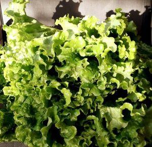 Σαλάτα σγουρή 1kg