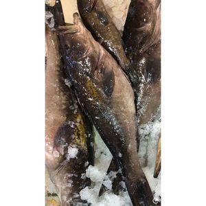 Σκορπίνα (800γρ έως 1000 γρ. κάθε ψάρι)