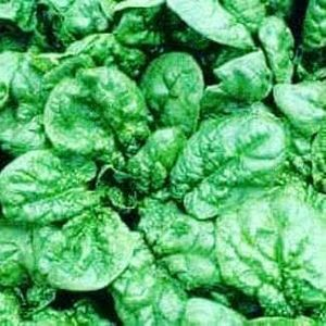 Σπανάκι 1 κιλού