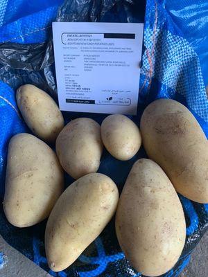 Πατάτα Αιγύπτου εισαγωγής 1kg - Παλέτα 800 κιλά