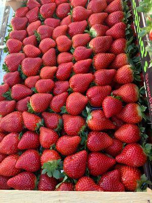 Φράουλα ποικιλίας Λιμβανέρας 1 κιλό - Τελάρο 5 κιλών