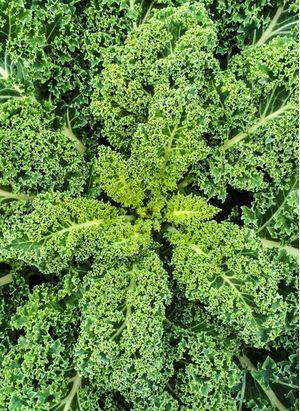 Kale τιμή κιλού