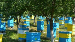 apiary Honey River