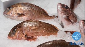 "Greek aquaculture red seabream (1-1,5kg) ""Pagrus major"" price per kilo"
