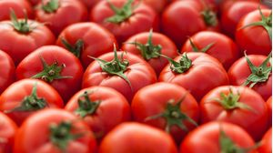 Greek Tomato A 'Quality BIO package