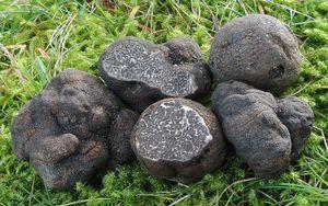 Black truffle Tuber Macrosporum 100 gr