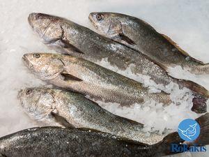 "Greek Aquaculture Meagre (1,5 - 2,5 kg) ""Argyrosomus regius"" price per kilo"