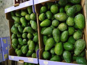 Cretan Organic Avocado