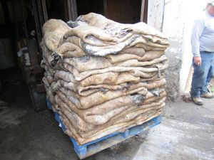 donkey hides for sale