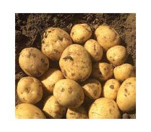 1kg potatoes in 10kg bags