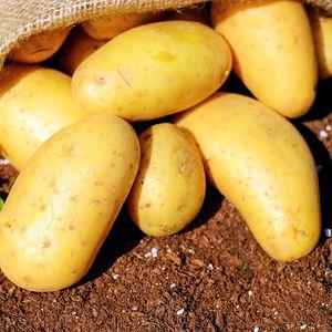 Mini imported potatoes 1kg