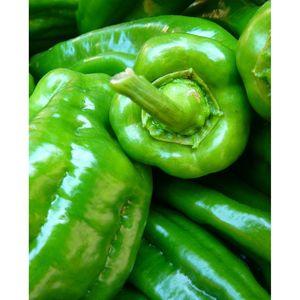 Long Green Greek Peppers bio 1kg