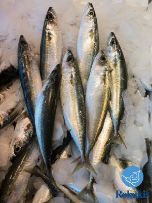 "Greek Chub mackerel ""Scomber japonicus"" price per kilo"