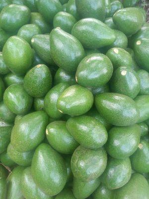 Fresh Hass Avocados Class 1 kg