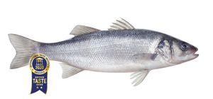 Seabass (Dicentrarchus labrax) 1 kg