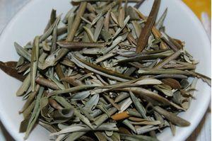 Olive Leaves - Tea