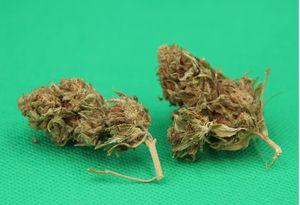 Cannabis light (legal) canapa CBD,   high quality flowers, from bio agricolture, Jasmine