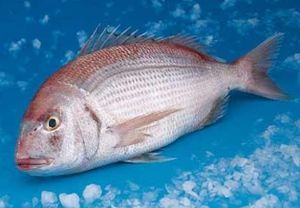 Red Porgy (Pagrus Pagrus) 1kg
