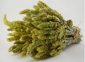 0.25kg-5pcs-Greek Olympus mountain tea-250g-sideritis scardica