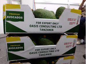 4kgs Boxes Hass Avocado