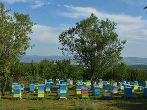 """Flower honey """"Honey River"""", 0,95 kg"""