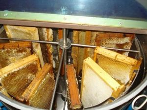 Honey from wild flowers and herbs 25kg
