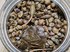 Greek capers in berries 4kg - 4 items