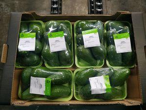 Cretan Organic Avocado in 1kg tray