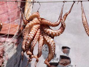 Octopus (Octopus vulgaris) box of 10kg