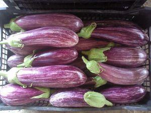 Eggplant Organic Tsakoniki 1 kg