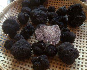 Black Truffle Tuber Mesentericum 20g