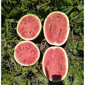 Watermelon Barrel 1 kg