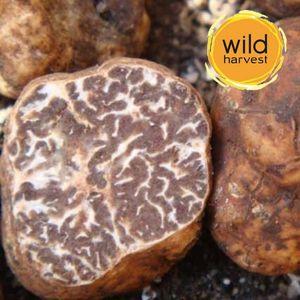 White Precious Truffle Tuber Magnatum 10g