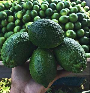 Lime thaiti, fresh limes - 18kg BOX
