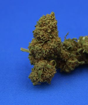 Cannabis light (legal) canapa CBD,   high quality flowers, from bio agricolture, Cannatonic
