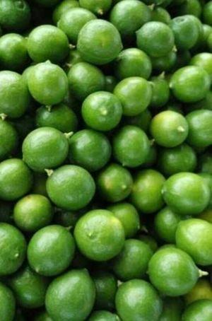 1kg green Lemon