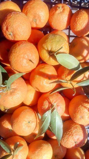 Tangerines Lakonias pallet 700 kg