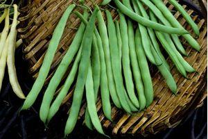 Φασολάκια πράσινα ΑΙΧΕ 1 κιλό