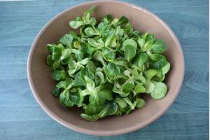Βαλεριάνα Σαλάτα 100γρ. 1 τεμάχιο