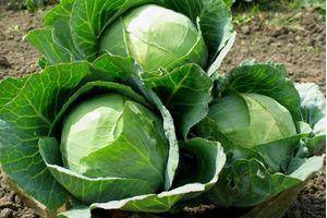 Αβραμιδης φρούτα λαχανικά