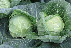 Λάχανο Άσπρο 1kg