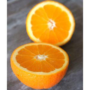Πορτοκάλια μέρλιν χυμού ελληνικά bio 1 κιλό