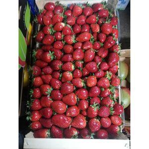 (Α)Φράουλα Ηλείας 3 κιλά ΠΡΟΣΦΟΡΑ