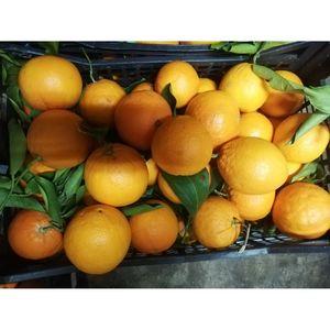 (Α)Πορτοκάλια Φαγητού Λακωνίας 1 κιλό