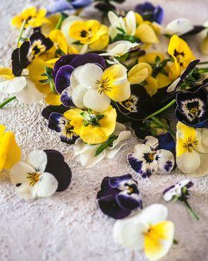 Λουλούδια Πανσέδες Βρώσιμα (25 Τεμάχια)