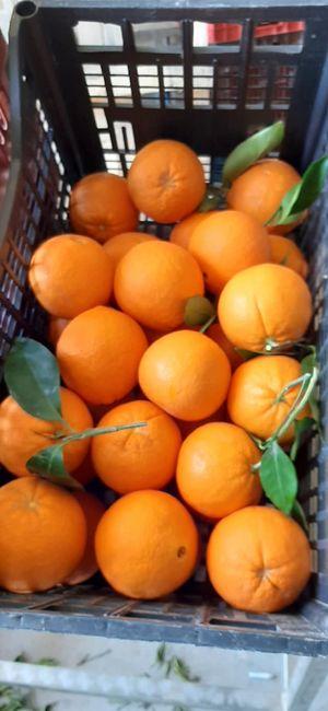 Πορτοκάλια Merlin Χυμού 1kg