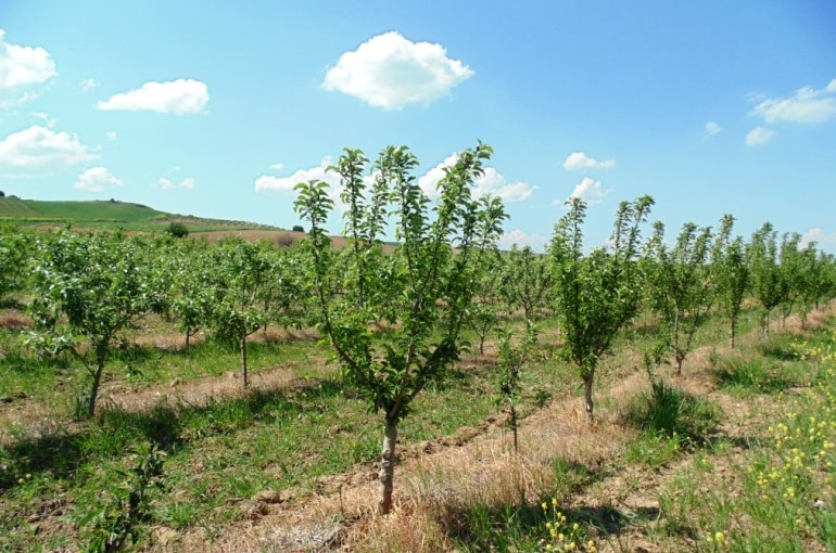 Apple Tree Water Requirements